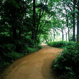 path trees naturephotography freetoedit