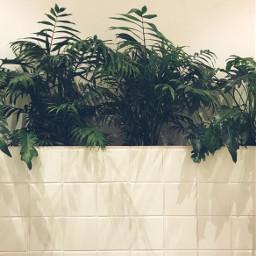 pcmyplants houseplants indoorplants homedecor organicvibes freetoedit