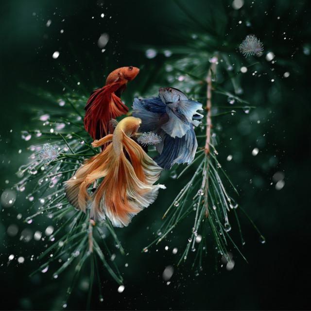 #freetoedit #fantasy #fish #snow #christmastree #amazing #seaweed