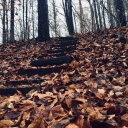 hikingtrails naturephotography leaves