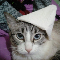petoutfit nala cat sombrero pcpetoutfit