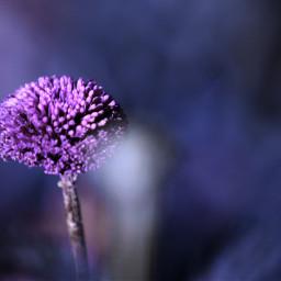 freetoedit photography flower flowerphotography purple