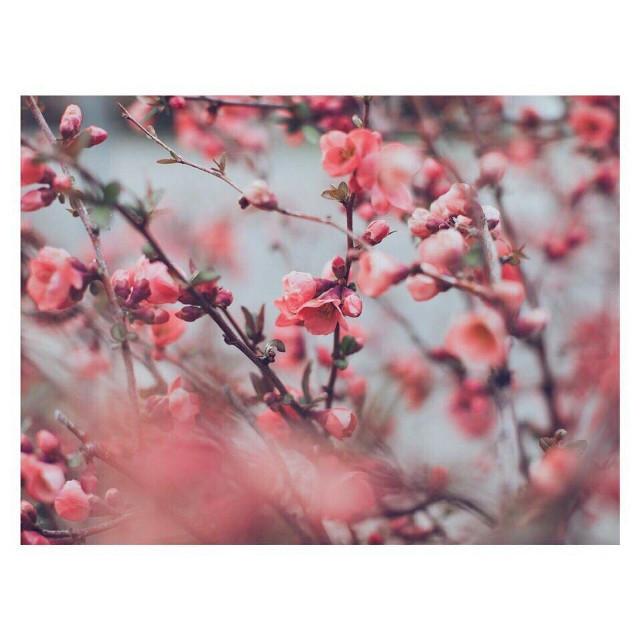 #freetoedit #Фон #flower #flowers #Цветы