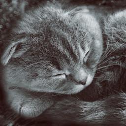 blackandwhite photography night cat mylove freetoedit