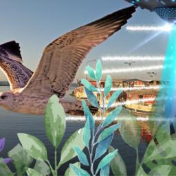 ufo seagull escape freetoedit