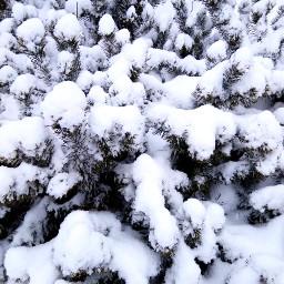 photography winter 2019 snow nature freetoedit