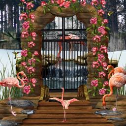 freetoedit flamingo garden ircdoodlethis doodlethis