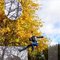 interesting season jump tree winter
