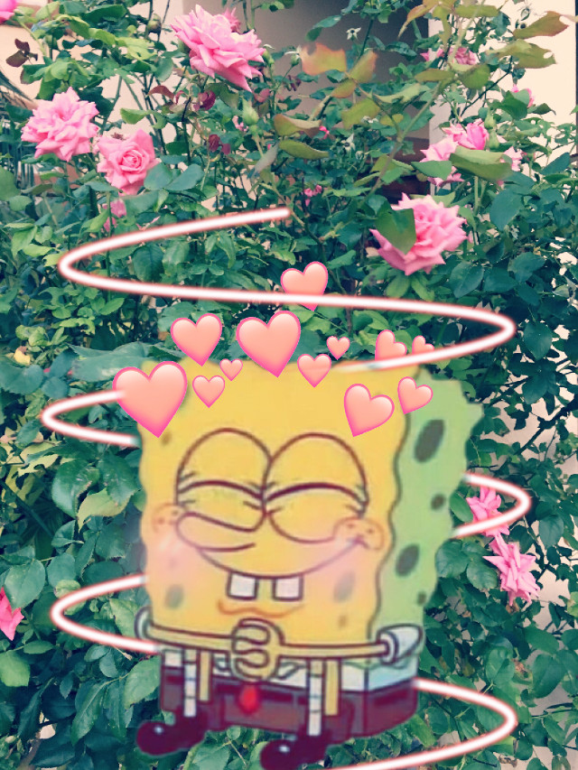 Edit if spongebob:) #freetoedit #spongebob #aesthetic #cute #heats #nature #swirl #flowers #PicsArt #adorable #manchester