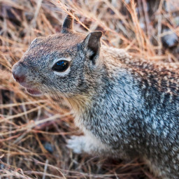 squirrel animal cute rodent brush pchalffaced freetoedit