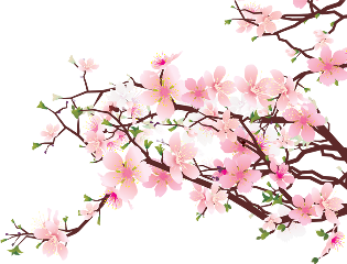 sakura cherryblossoms pink pinkflower freetoedit
