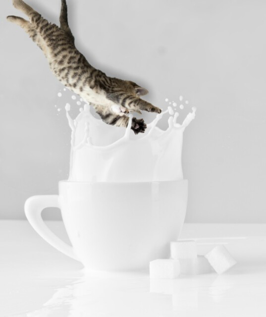 #freetoedit #cat #funny #like4like #follow4follow