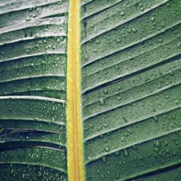 freetoedit nature wintertime rainydays greenleaf