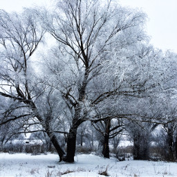 photography nature winter snow trees freetoedit