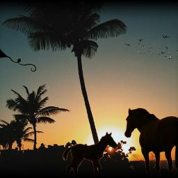 freetoedit horses horselover horserider horseriding