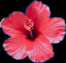 #flower #fiji #petals #flowerpower #flora #pink