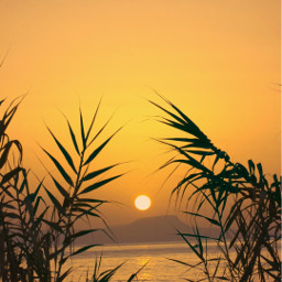 freetoedit endoftheday sunsettime goldenhour grass wildplants silhouettes seaview horizon sunsetting hilltopview goldenlight lowangleshot naturephotography