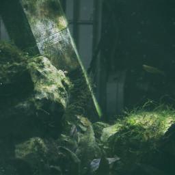 aquarium fish plant green old freetoedit