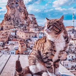 freetoedit cat turkey cappadocia ig_cameras_united