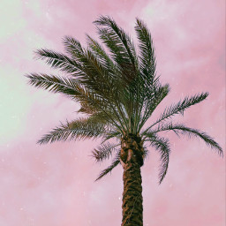 freetoedit palmtree sky