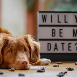 dog valentine valentinesday cute love freetoedit