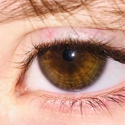 pcwindowstothesoul windowstothesoul freetoedit eyes eyescolor