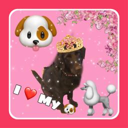 doggo dog doglove doglover doglover4life freetoedit