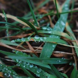 freetoedit raindrops raindropsonleaves love