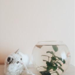 freetoedit cat animals cutecat art