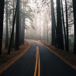 nature road trees background backgrounds freetoedit