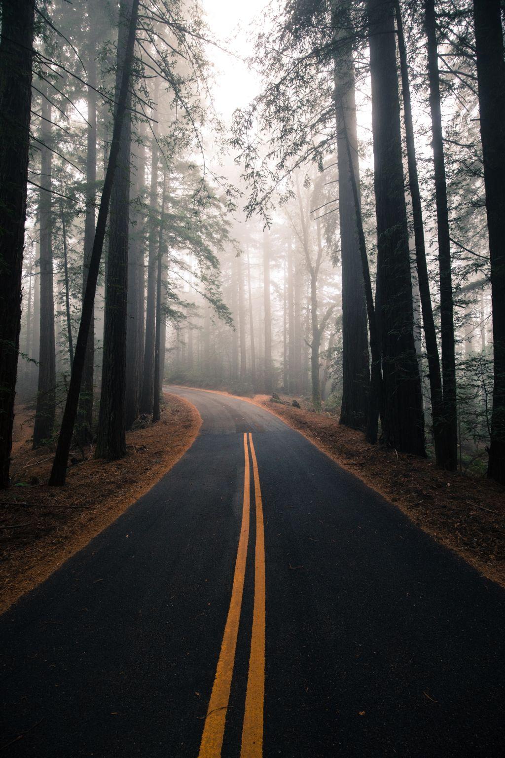 Create something awesome! Unsplash (Public Domain) #nature #road #trees #background #backgrounds #freetoedit