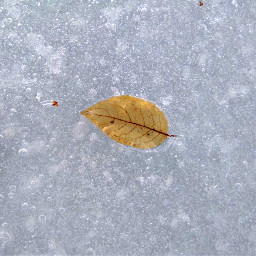 photography winter snow ice leaves freetoedit