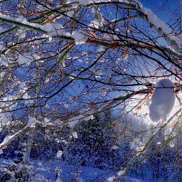 angeleyesimages landscapephotography snow winter snowscape freetoedit