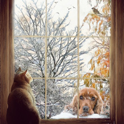 freetoedit wintertime windowview pets