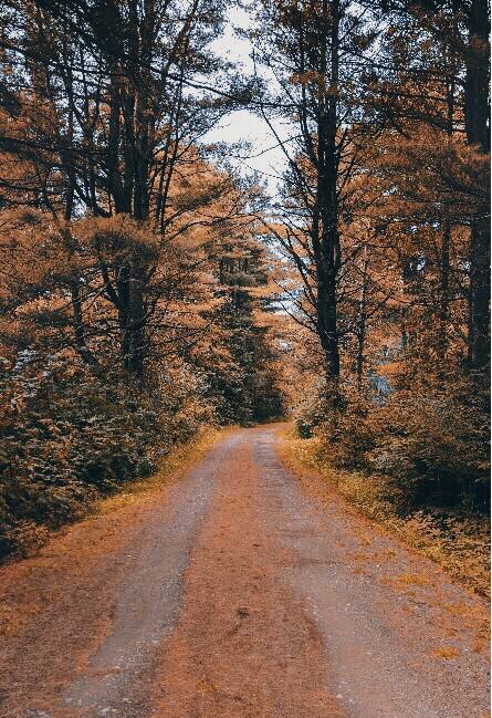 #freetoedit  #walkinginthewoods #pathway #vanishingpoint #trees #fallenleaves #wildvegetation #nature_lover #lowangleview #naturephotography