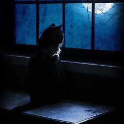 blackcat window night moon waiting