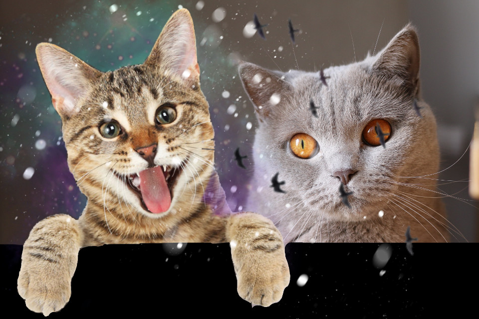 #freetoedit  #cats #cat #funny #grumpy