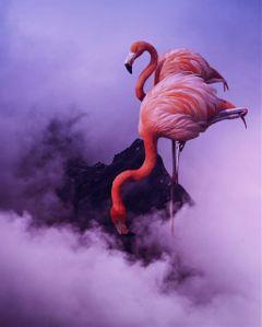 #catcuratedpink,#pink