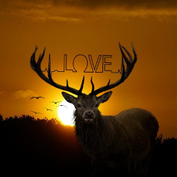 freetoedit myedit deer love sunset srclovepulse