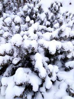 #origftewinter,#catcuratedwinter,#winter,#wintertime,#winterparks,#winterlove