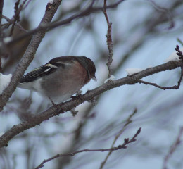 #catcuratedbirds,#bird,#birds