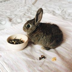 #catcuratedrabbit,#catcuratedrabbits