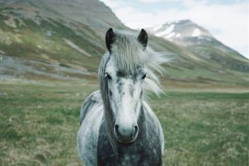 #catcuratedhorse,#catcuratedhorses,#horse,#horses