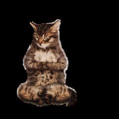 kitty zen meditate