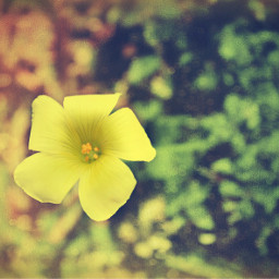 freetoedit flowers nature simpleflower grassflower