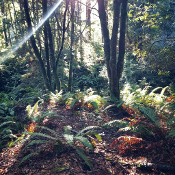 home woods forest trees ferns