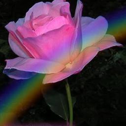 freetoedit florido arcoires
