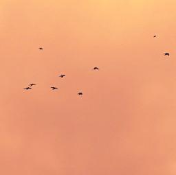 freetoedit birdsinflight