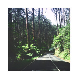freetoedit forest trees nature tumblr