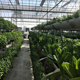 plantation plants flowers grass vegetation freetoedit